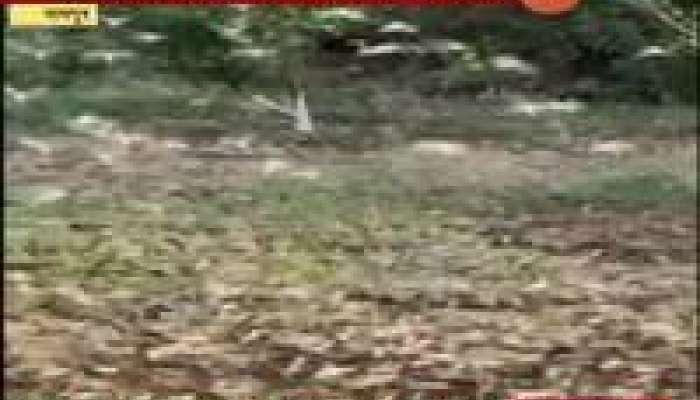 ड्रोनच्या माध्यमातून टोळधाडीवर लक्ष, किटकनाशक फवारणी करण्याचा प्रयोग