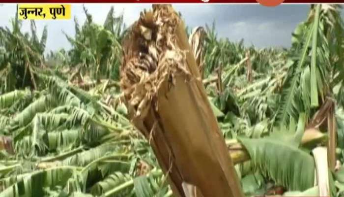 Pune Junnar Bannana Growing Farmers Farm Destroyed In Nisarga Cyclone