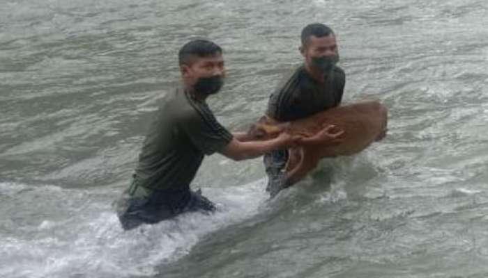 कौतुकास्पद! गर्भवती हरिणीला वाचवण्यासाठी जवानाची नदीत उडी