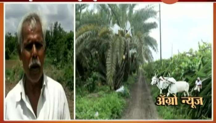 Osmanabad Crisis Of Double Sowing In Front Of Farmers
