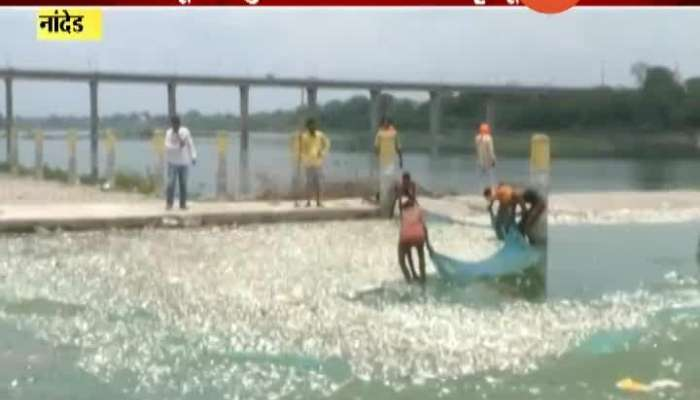 Nanded Millions Of Fish Die Due To Increasing Pollution
