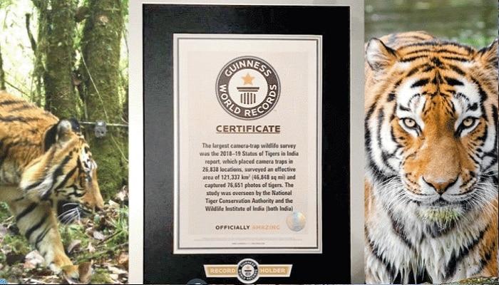भारताचं नवीन विश्वविक्रम; वाघांच्या संख्येत दुपटीने वाढ