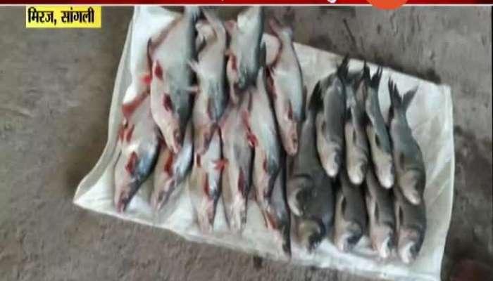 Sangli Miraj Fishing Business Get Profit To Farmers
