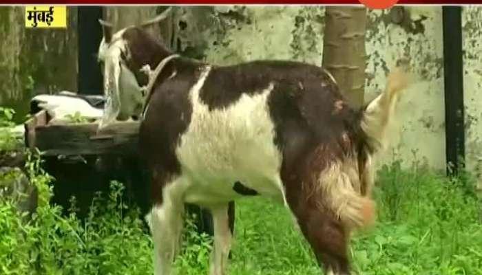 Mumbai Corona Impact On Bakri Eid