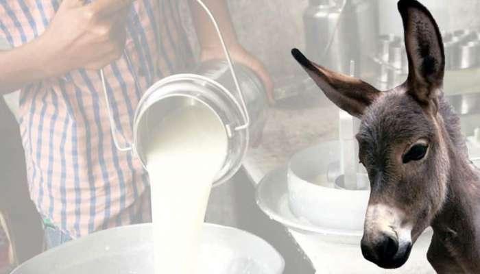 देशात सुरु होतेय गाढविणीच्या दुधाची डेअरी, १ लीटरची किंमत ऐकून व्हाल हैराण