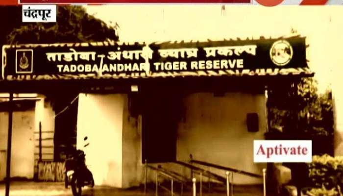 Chandrapur Tadoba Andhari Tiger Reserve To Reopen In Unlockdown