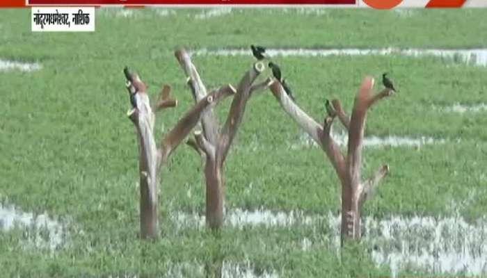 Nashik,Nandurmadhshwar When Will Tourist And Bird Lovers Get Permission