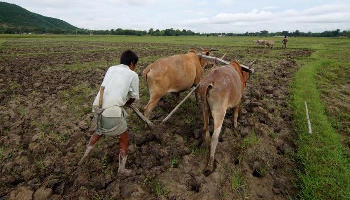परतीच्या पावसाचा शेतकऱ्यांना फटका ; १ लाख ३० हेक्टर पिक वाया