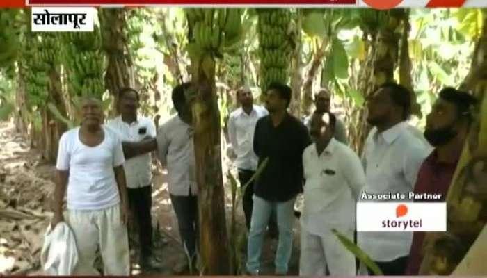 Solapur Banana Farmers In Trouble