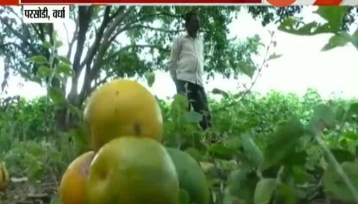 Vardha Orange Farm Farmers In Problem For No Market Demand