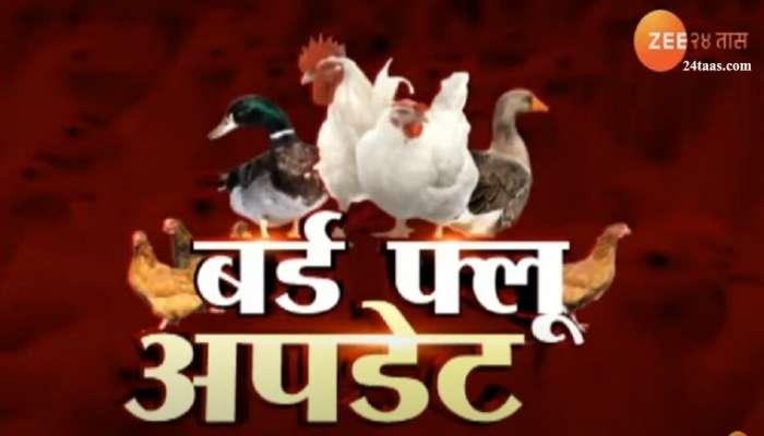 बर्ड फ्लूचा धोका : रत्नागिरी आणि कोल्हापुरात पक्षी मृतावस्थेत
