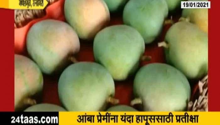 Ratnagiri,Ganeshmule Good Rate For Mangoes