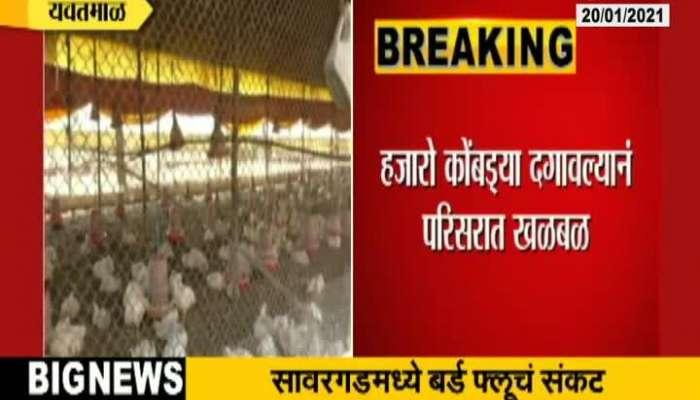 Yavatmal Administration Alert From 3700 Hens Dead By Bird Flu