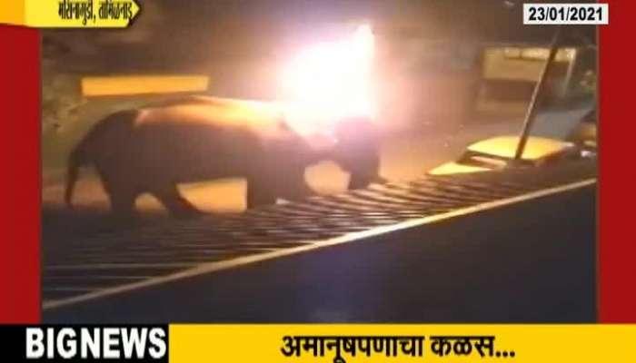 Tamilnadu Elephant Set On Fire Where Forest Ranger Cries On Death Of Elephant