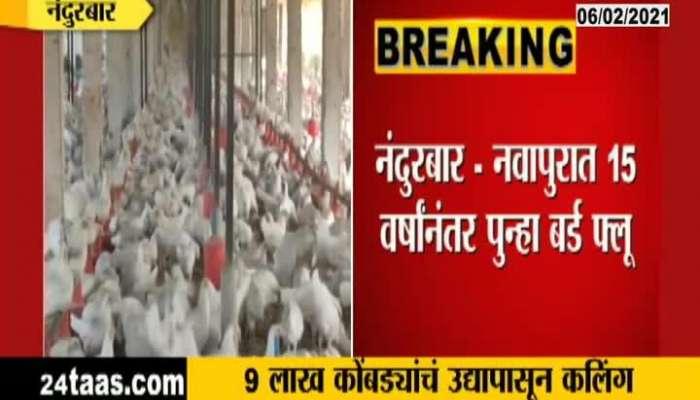 Nandurbar,Navapur Agian Bird Flu After 15 Years