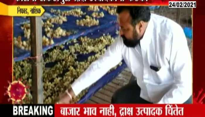 Nashik Grapes Farmer In Trouble