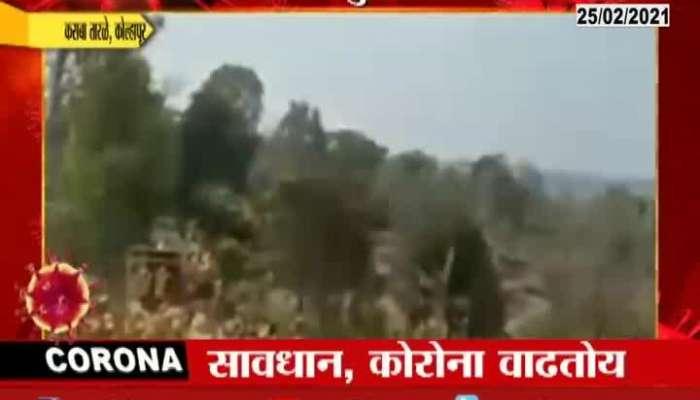 Kolhapur Kasba tarleno social distancing in Balumama Festival