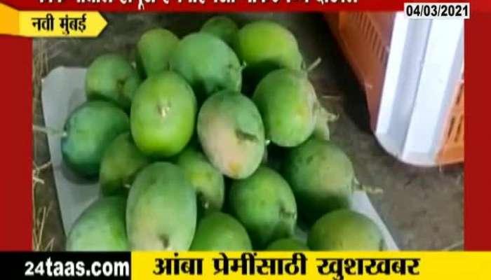 Kokan Hapus Mango Available In APMC Market At Navi Mumbai
