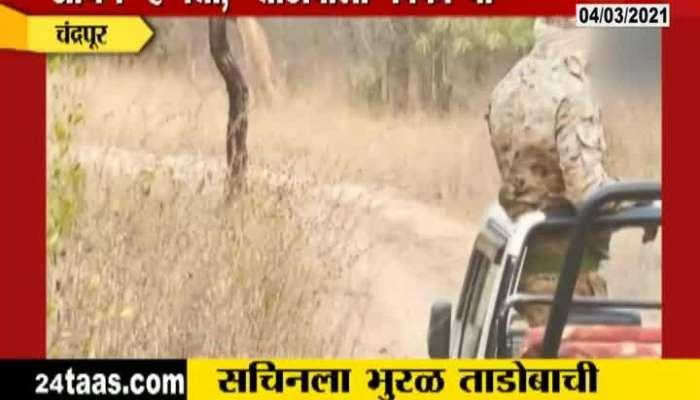 Chandrapur Sachin Tendulkar_s Visits Tadoba Andhari Tiger Reserve
