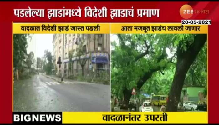Mumbai Municipal Audits Tree Fallen Or Uprooted In Cyclone Tauktae