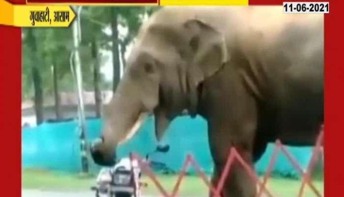 Aasam Guwahati Elephant Eating Helmet