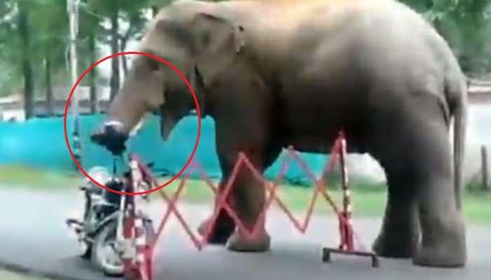 अरे देवा! भुकेलेल्या हत्तीनं चक्क हेल्मेटच खाल्लं, व्हिडीओ