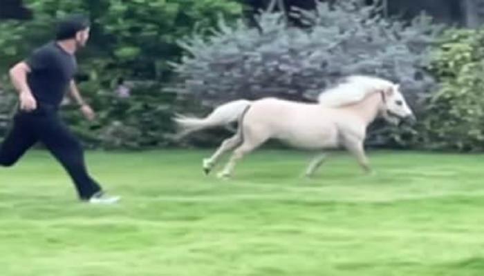 कॅप्टन कूल धोनीने आपल्या पोनी घोड्यासोबत लावली रेस, कोण जिंकलं पाहा व्हिडीओ