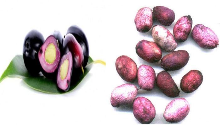 Jambhul Seeds | मधुमेहावर गुणकारी जांभळाच्या बिया, जाणून घ्या अन्य फायदे