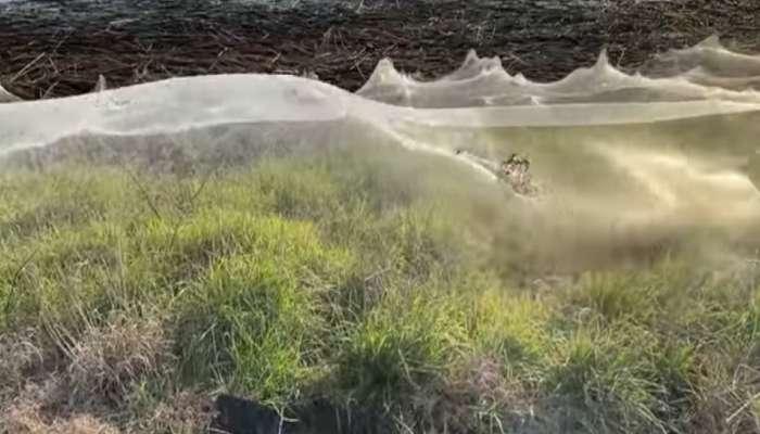 बापरे! ही दृश्यं पाहून तुम्हाला हॅरी पॉटरमधील विशालकाय कोळ्याचा सीन आठवेल, व्हिडीओ
