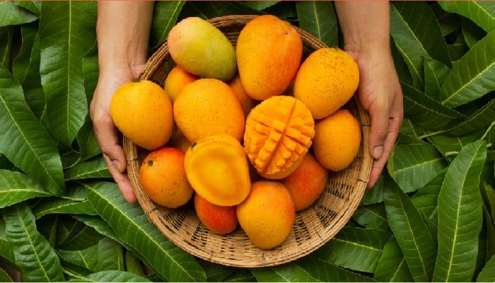 मधुमेही रूग्णांनी आंबा खावा का? जाणून घ्या किती प्रमाणात खावा