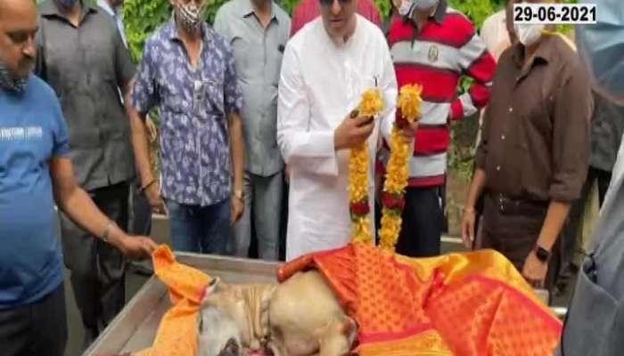 Raj Thackeray's beloved dog James dies