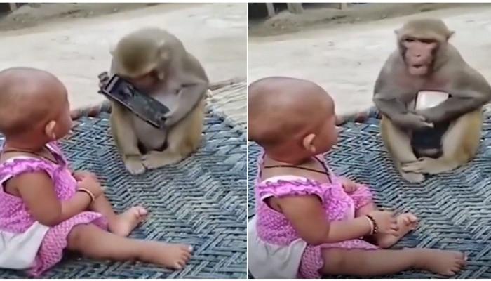 लहानमुलांप्रमाणे माकडालाही मोबाईलचा मोह आवरेना...तुम्हीच सांगा मोबाईल कोणाकडे हवा?