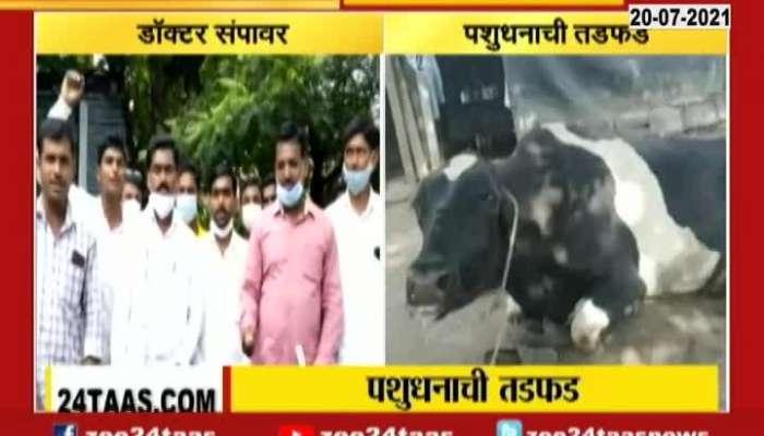 Beed Animal Husbandry Doctors On Strike As Result Farmers Suffers