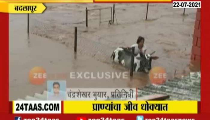 Badlapur Panavtha Many Animals Being Rescued From Flood Water From Heavy Rainfall