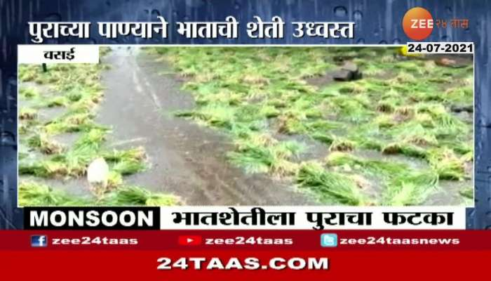 VASAI RICE FARMS ARE UNDER FLOOD WATER