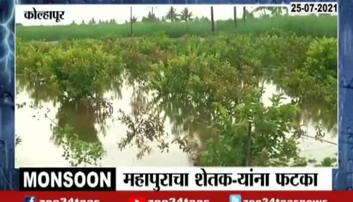 Kolhapur, Shirol Heavy Rain Affect On Farmers see current situation