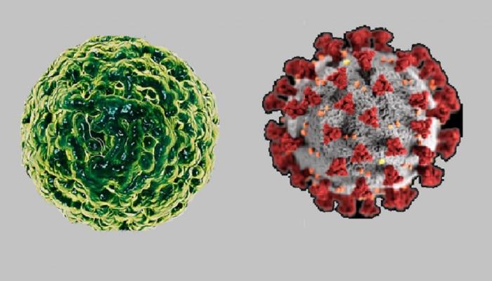 नोरो व्हायरस कोरोना व्हायरस पेक्षा घातक आहे का?