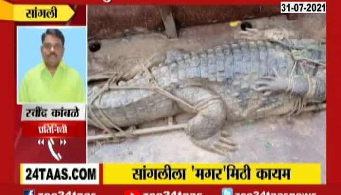 Sangli 12 Feet Crocodile Found