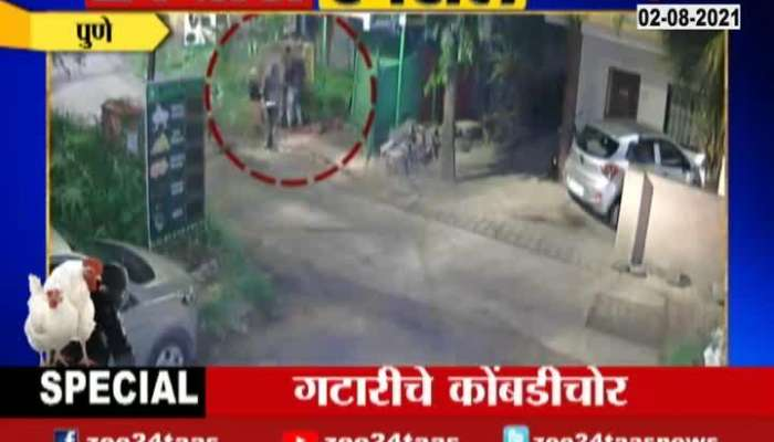 pune chicken theft found in cctv, see what is happening