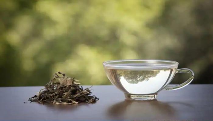 साधा चहा सोडा...White Tea ट्राय करा! आरोग्यासाठीही ठरतो फायदेशीर