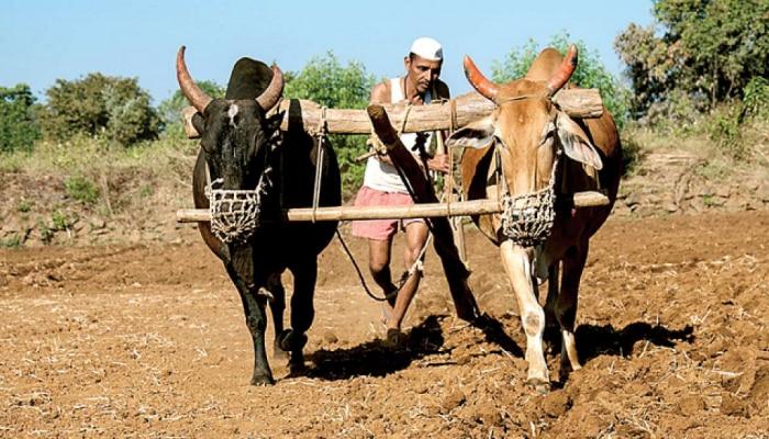 देशातील 50 टक्के शेतकरी कर्जाच्या ओझ्यात; NSOच्या अहवालात माहिती  समोर