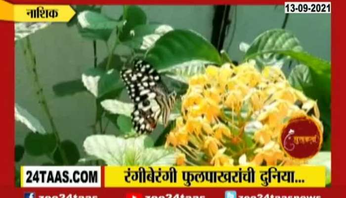 September Month Celebrated As Butterfly Month