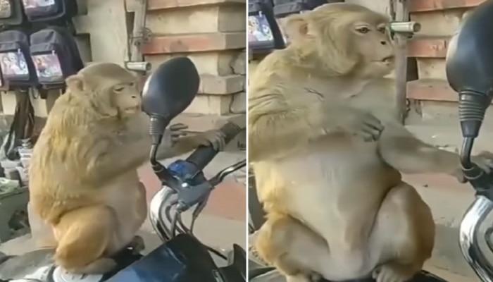 आरशात स्वत:चाच चेहरा पाहून घाबरला माकड, त्यानंतर त्यानं जे केलं ते पाहून तुम्हाला हसू आवरणार नाही, पाहा व्हिडीओ