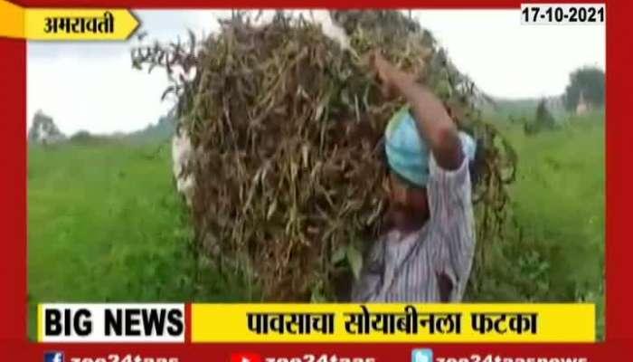 Amravati Farmer In Deep Problem For Soyabean Crop Damage